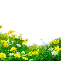 Blumenwiese Freisteller