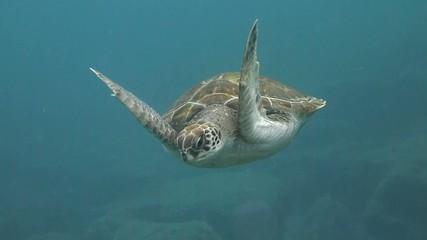 Sea Turtle ( Extended)