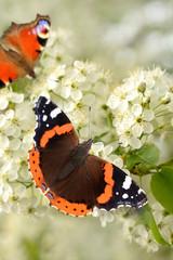 Schmetterling 130