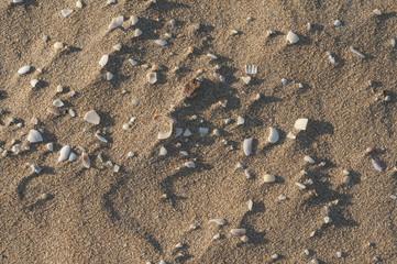 Playa y conchas
