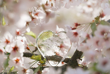 glass clear heart in Spring with blossom