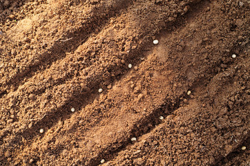 Soil sowing seeds background with sunlight