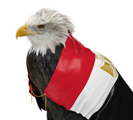 Powerful eagle wearing the country flag of Egypt