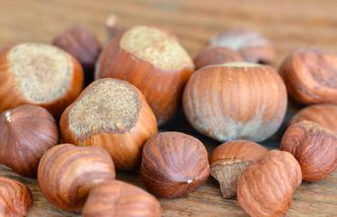 Hazelnut / Haselnuss - Nuts / Nüsse - On Wood / Auf Holz