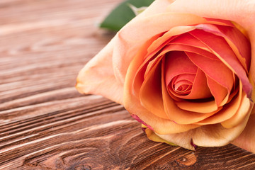 rose flower on wood background