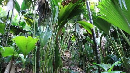 Tourist trail in Vallee de Mai Nature Reserve
