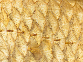 bright golden scales
