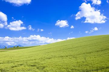 丘の町美瑛の田園風景