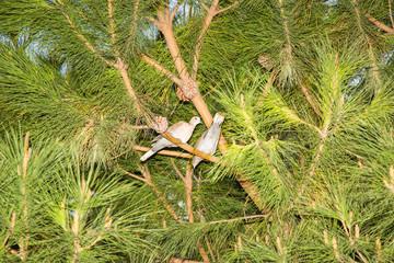 Ağaçta Kuşlar