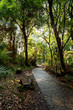 Pathway in a Park Victoria Falls, Zimbabwe in Spring - 81846332