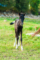 Horse and Her Foal in a Green Field of Grass.
