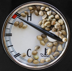 Auto thermometer  and hemp seeds on it