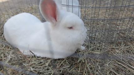 Rabbits In A Cage closeup