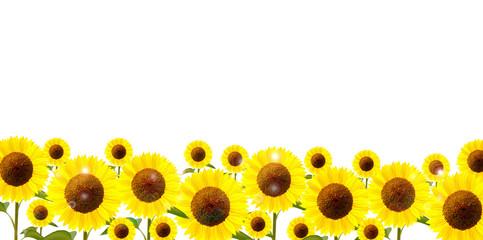 ひまわり 花 背景