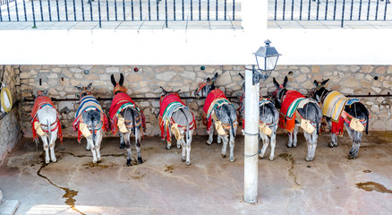 Donkey taxi in Mijas village, Andalusia. Spain