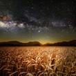 field of grass - 81854371