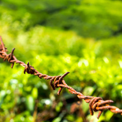 protection concept of steel barbed wire on rural green backgroun