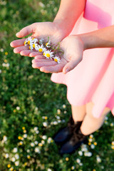 Woman hands holding a daisies