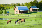 Horses and Bluebonnets