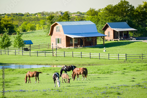 Staande foto Ezel Horses and Bluebonnets