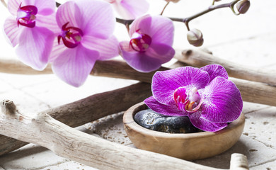 natural elements for spa treatment with ordchids background