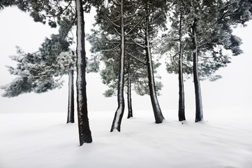 winter landscape with snowy forest