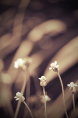 flower on blur background