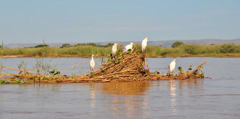 The bird ferry