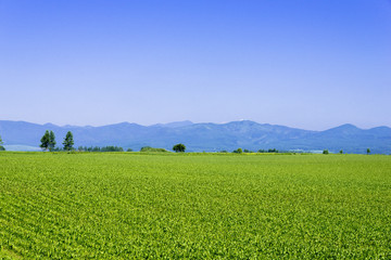 帯広平野の田園風景