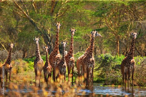In de dag Giraffe giraffe