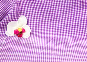 Weiße Orchidee vor karierter Kulisse