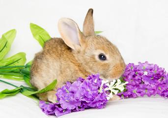 Coniglietto tra i fiori viola
