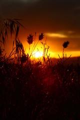 başak-günbatımı-Doğu-2