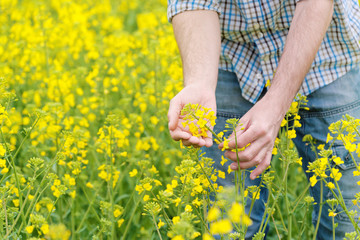 Farmer Standing in Oilseed Rapeseed Agricultural Field