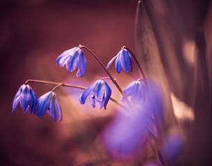 small violet flowers at spring season garden