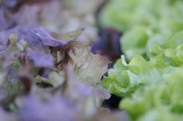 salat 07