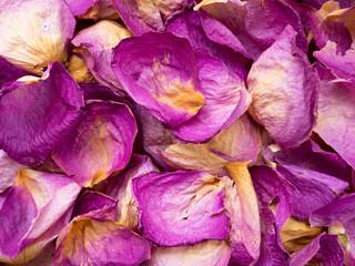 Dry pink rose petals background