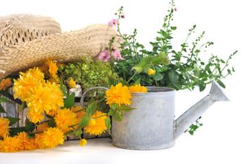 fleurs jaunes parmi plantes vertes