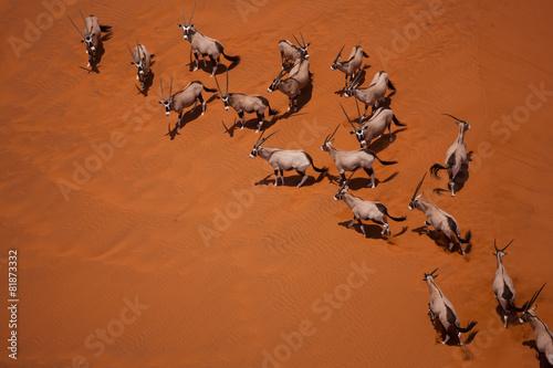 Staande foto Antilope oryx