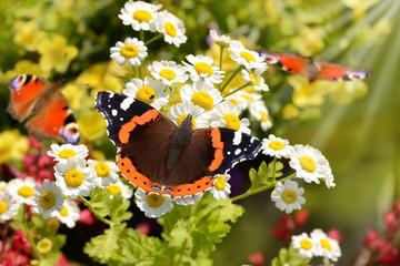 Schmetterling 139