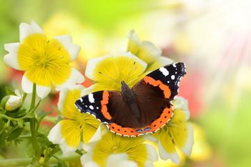 Schmetterling 142