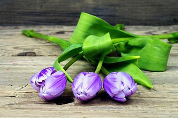 Three purple white tulips
