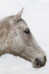 Pferdekopf II