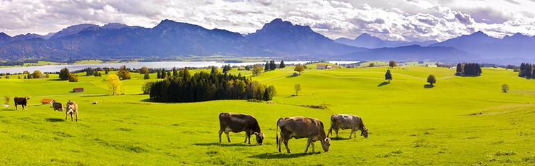 Panorama Landschaft in Bayern mit Alpen am Forggensee