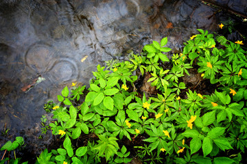 green flowers leaf near puddle