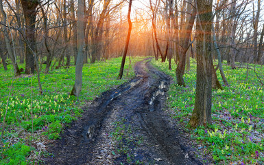 dirt road in spring forest