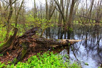 Spring bog in forest