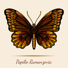 Papilio Rumanzovia Butterfly