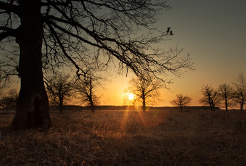 Sunset in the early spring in an oak grove