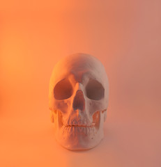 Red light skull front view.
